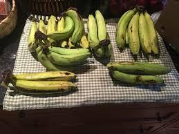 Gros Michel banana