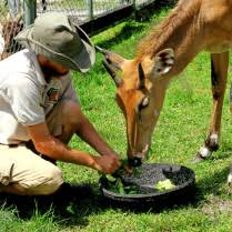 Photo Essay  A Day in the Life of a Zoo Keeper   Multimedia
