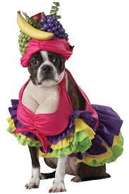 60 creative dog halloween costumes ideas