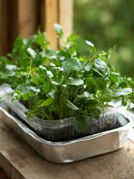 how to grow a watercress container garden hgtv