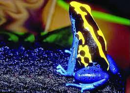 отровни жаби срещу човека