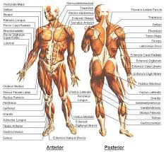 Anatomy And Physiology Chapter 1 Review Answers Human Anatomy And Physiology Chapter 1 Review An Introduction