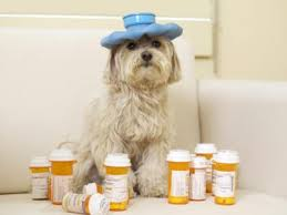 Can dogs take Ibuprofen?