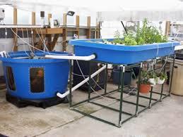 Backyard Aquaponics  Aqua Botanical - Backyard aquaponics system design