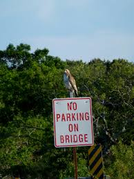 no parking on bridge sign in eastham on cape cod cape cod