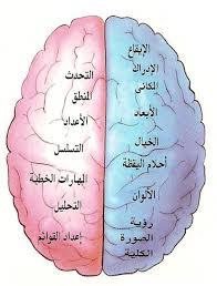 تأثير الخمر الجهاز العصبي