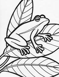 pics photos printable coloring page princess frog cartoons