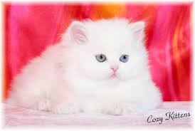 حبايبي القطط Images?q=tbn:ANd9GcSnx8FxrA6tK7mZuATiPH_IwgigEo4KUfsd-e2YgJKCocnHEIbC