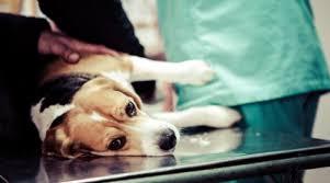 Londrina (PR) castra 90 animais de famílias de baixa renda