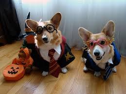Dog Costumes Halloween 25 Harry Potter Dog Costume Ideas Harry