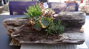 garden gift diy succulents in a driftwood planter tended