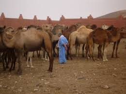 http:  t1 gstatic com images q tbn:ANd9GcSqM2Se8x0edqrEvmLYh1AzsXzpx7KYFG9NKU0xhy0b7 6oATBg Guelmim et ses environs au Maroc