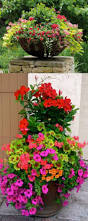 361 best landscaping images on pinterest pots plants and flowers