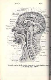 dorland u0027s illustrated medical dictionary abebooks