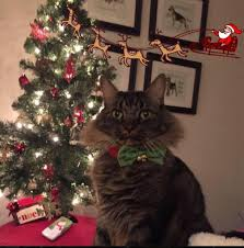 Simons Cat Christmas Tree by Photo Contest