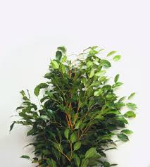 tropical house plants for indoor use
