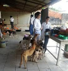 Cães sobreviventes de Santa Cruz do Arari (PA) se recuperam