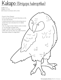 kakapo coloring finwitch deviantart