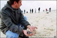Possível desastre ecológico ameaça litoral da França | BBC Brasil ...