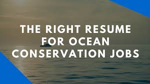 Resume That Gets The Job by The Resume For Marine Science And Conservation Careers Speak Up