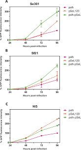a novel baculovirus derived promoter with high activity in the