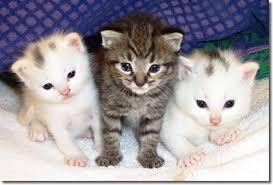 Curiosidades de Perros y Gatos ;)