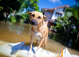 Natural Disaster Preparedness With Pets