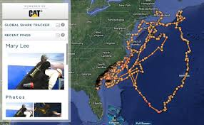 Florida Shark Attack Map by How I Learned To Stop Worrying And Love The Great White Shark