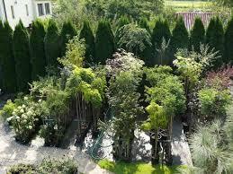 rośliny ozdobne Szkółka drzew i krzewów ozdobnych Pawica Czaniec - rosliny-ozdobne-4fe5aee08f7f5