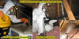 How Do You Get Rid Of Possums In The Backyard by How To Get Rid Of Rats In House Building Attic Without Poison