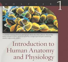 Anatomy And Physiology Chapter 1 Review Answers Ch01 Jpg
