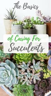 the basics of caring for succulents