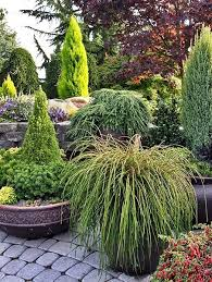 72 best conifer gardening images on pinterest evergreen garden