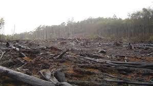 ways to stop deforestation   MNN   Mother Nature Network deforestation