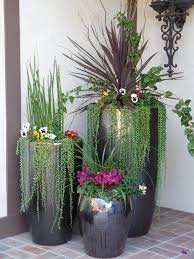 plants will adorn our home potted plants outdoor ideas love this