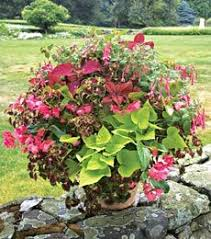 273 best container gardens images on pinterest garden container