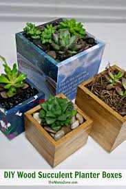 Diy Succulents Planting Succulents In Boxes With No Drainage