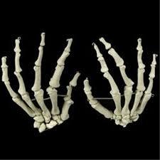 Halloween Skeleton Props by Realistic Dead Pet Zombie Skeleton Pit Bull Dog Creepy Halloween