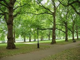 images about Assignment     Parks   Component   on Pinterest Pinterest Green Park  London