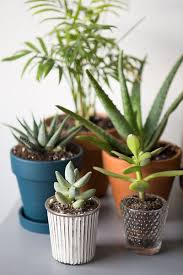 Office Desk Plants by How To Keep Your Indoor Plants Alive The Everygirl
