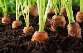 easy vegetables to grow at home u0026 indoors backyard riches