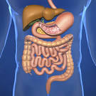 <b>Digestive System Fistula</b> - Doctor answers on HealthTap