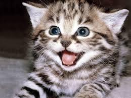 """Alasan Kenapa Kucing Di Panggil """"PUS"""""""