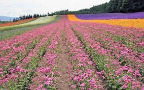 فصل الربيع Images?q=tbn:ANd9GcT1emNv5s1QbeBR7Azb3MHd34EZ1cTUNov7bmJq6RY9Lb_oIwOktQ