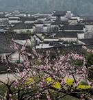 Flowers seen in front of ancient houses in Huangshan City, China´s ... english.cntv.cn