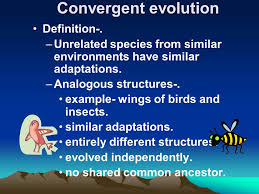 Darwin     s Theory of Evolution Concept      pp ppt download    Figure       The leopard shares many characteristics with the lion   which belongs to the same genus   but far fewer characteristics with snails  sponges