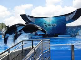 seaworld black friday deals 107 best sea world orlando florida images on pinterest