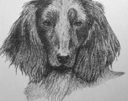 afghan hound long haired dogs long haired dogs etsy