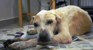 Cão abandonado idoso morre após ganhar carinho e vídeo comove ...