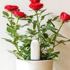 Flowers Plants by Xiaomi Flower Plants Monitor Light Nutrient Temperature Moisture